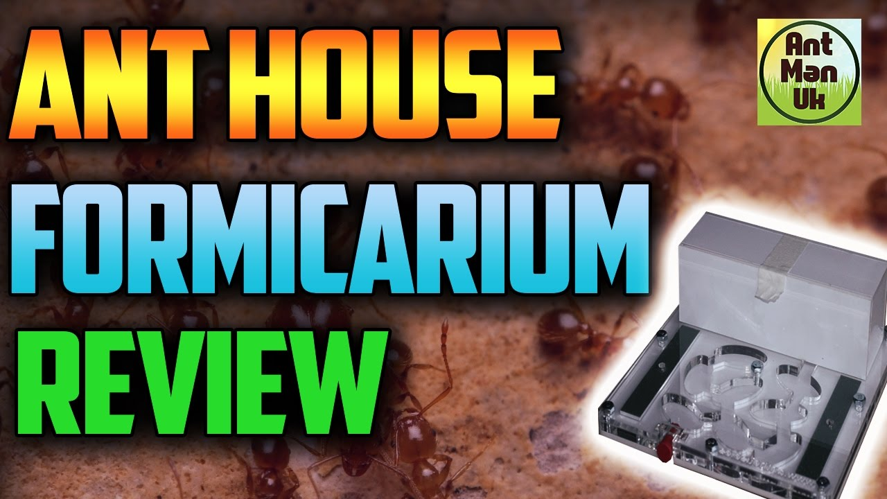 Ant House Ant Formicarium Review | 15% Discount Code - YouTube