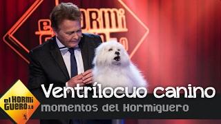El primer ventrílocuo capaz de hablar a través de un perro de carne y hueso  - El Hormiguero 3.0