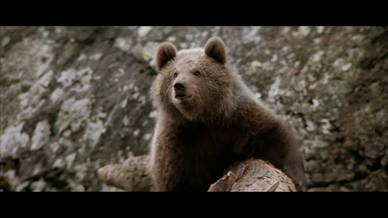 спасение медвежонка от пумы фильм полностью
