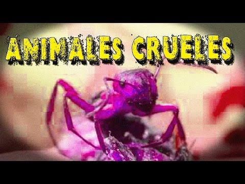 Los 5 Animales Mas crueles de la Naturaleza