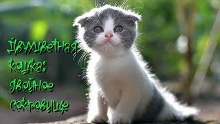 Двухцветная кошка двойное сокровище