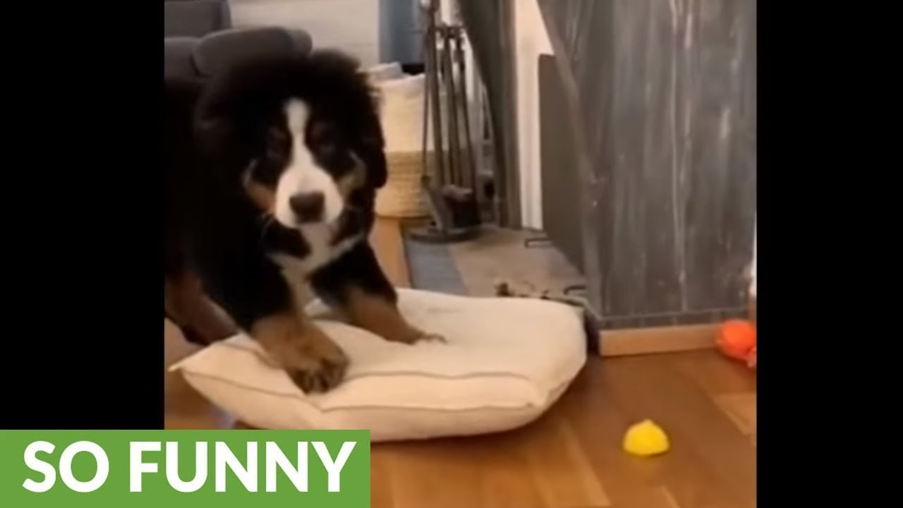Puppy Engages In Epic Battle With Lemon