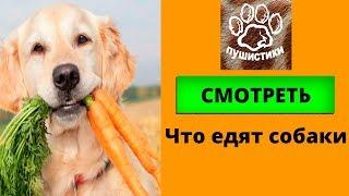 Собаки смешно едят, фильмы про животных для детей, игривые собачки