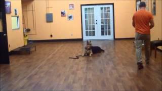 San Antonio Dog Training Co. Sarge