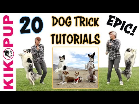 DOG TRICKS - 20 Trick Tutorials!