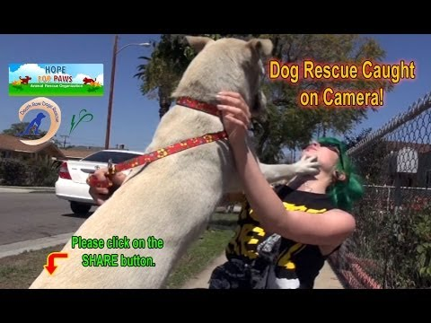 Abandoned dog, waiting for her owner to come back gets rescued - Please share!