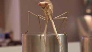 Mantis Monsters Aliens Caught On Tape Killer, Aggression, Assault, Mantis Demon Attack