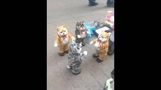 Укуренные коты киборги