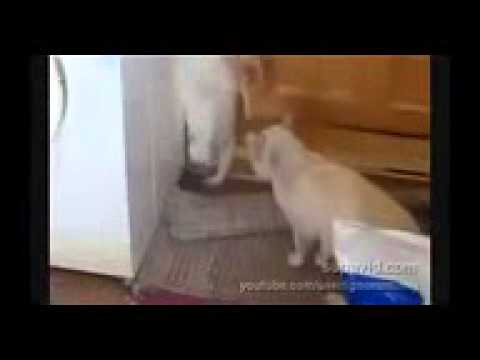 Chat marrant TOP 10 DES CHATS MARRANTS ET MIGNONS FUNNY CAT