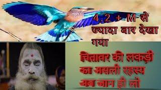 ( चितावर की लकड़ी ,उसकी पहचान और प्रयोग ) ( Chitawar Ki Lakdi, Uski Pehchan Or Paryog )