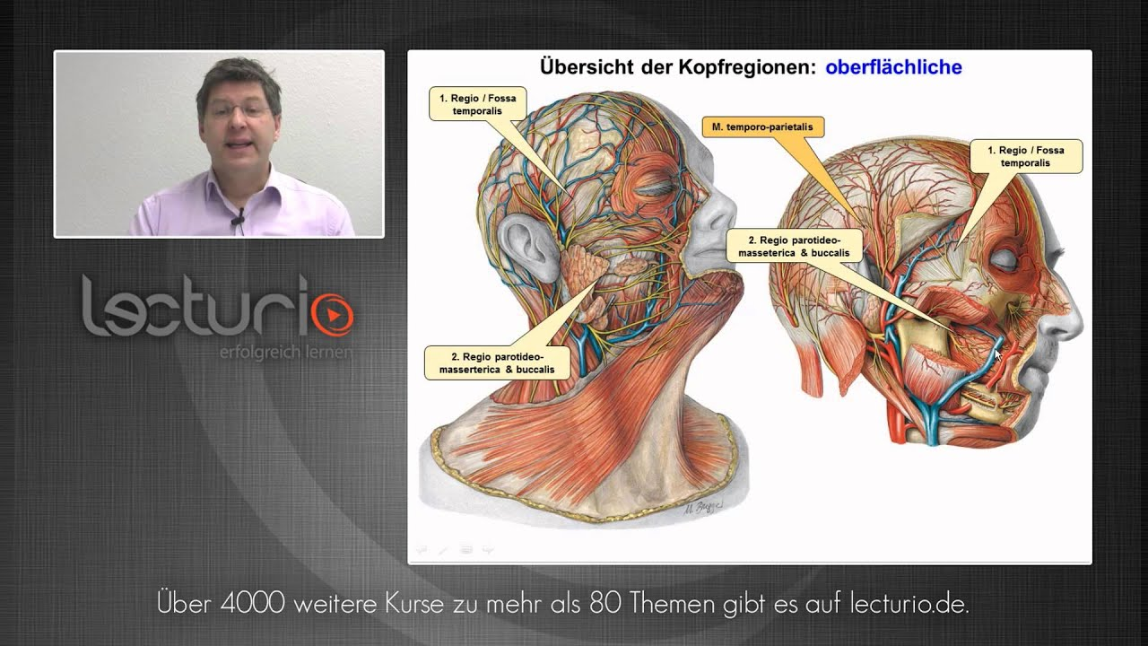 Anatomie online: Kopf- und Halsregionen | Dr. med. Steffen-Boris ...