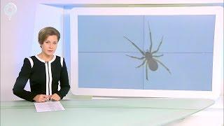 Необычных пауков находят жители Новосибирской области на своих приусадебных участках