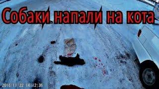 "DARK STAlb & ОФ ""Сердца Павлодара"" - Собаки напали на кота (The dog attacked the cat)"