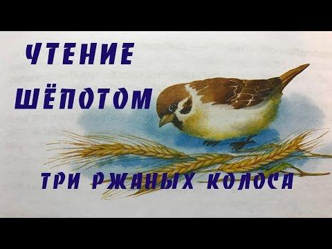 АСМР/ ASMR /ЧИТАЮ СКАЗКУ ШЕПОТОМ /ТРИ РЖАНЫХ КОЛОСА/