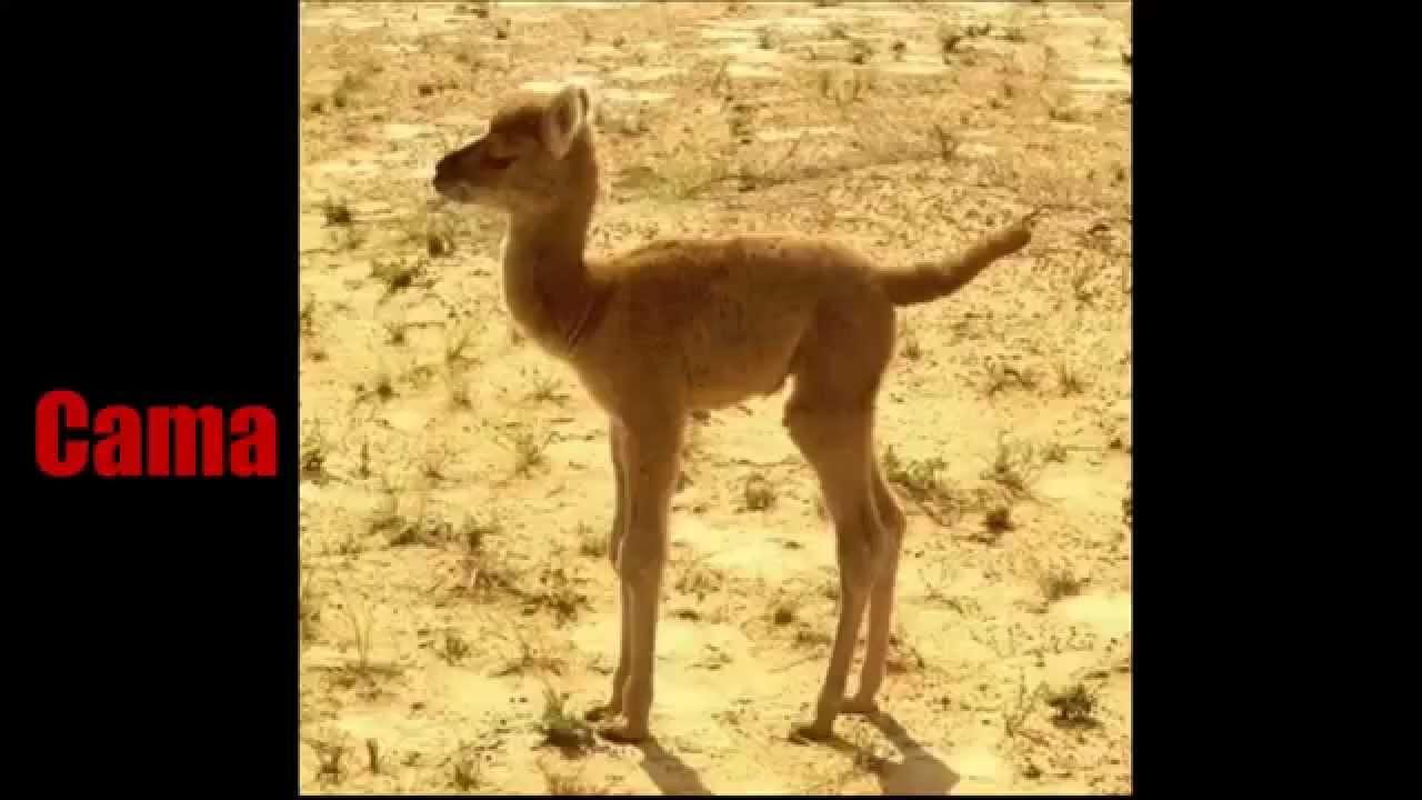 Híbridos de Animales (Reales) | parte 1