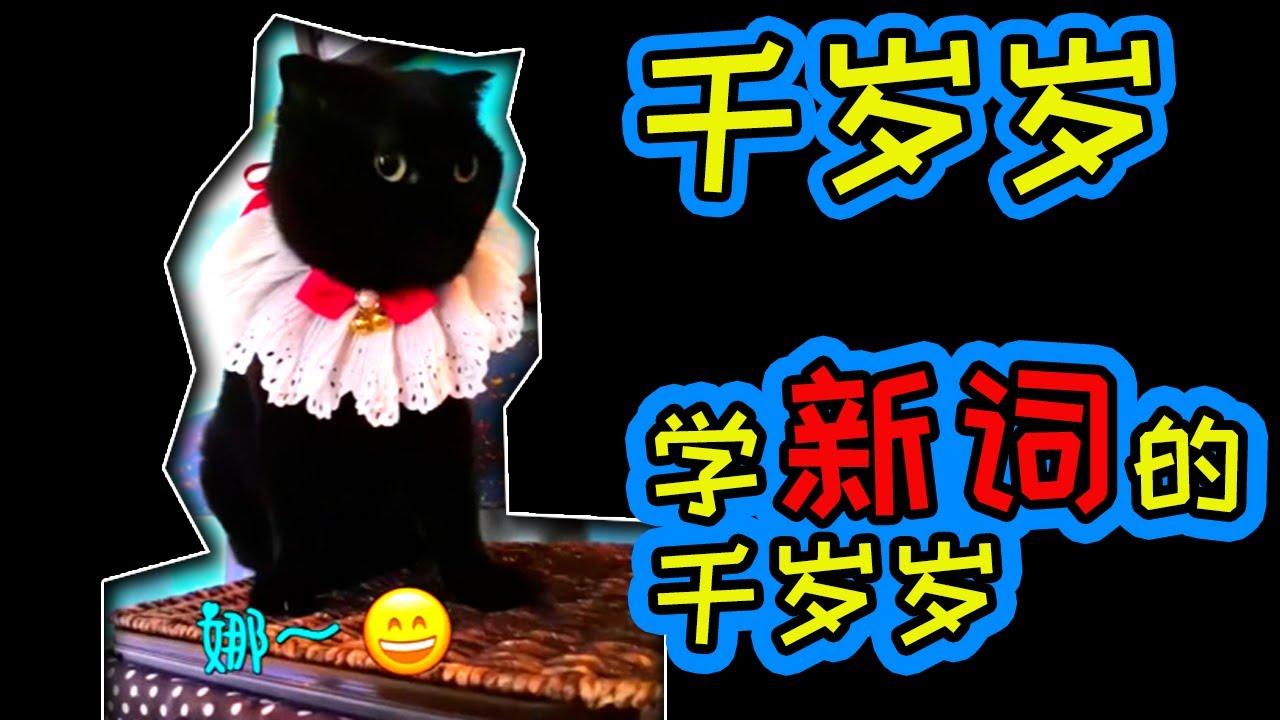 【千岁岁】耐心粑粑教新单词! | #千岁岁 #抖音搞笑 #黑猫千岁岁 #萌猫