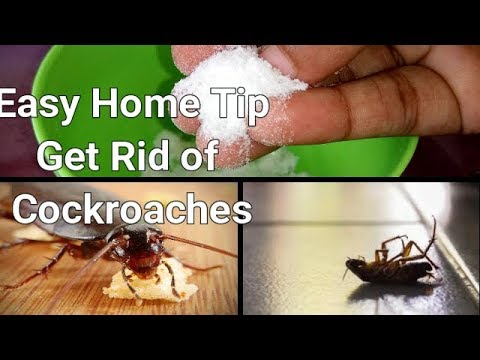 Useful Kitchen Tip || How To Get Rid Of Cockroaches In Kitchen Cabinets || Natural Home Remedies