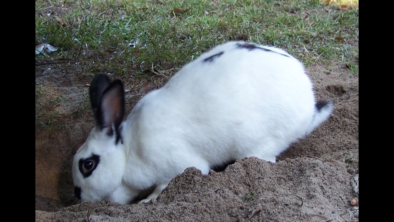 Bunny in a hole - 2 10