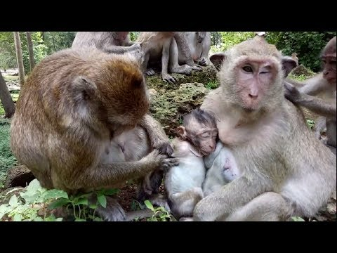 Thumbnail: Give Me Your Baby Monkey! Impossible ST503 Mono Monkey