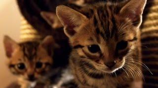 【B站/纪录片】第五频道-小喵的秘密.下(Ch5-the secret life of kittens )英语中字/翻译by纪录片之家字幕组 thumbnail