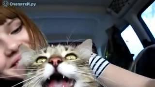 Кот радостный что он едет на дачу)!😊