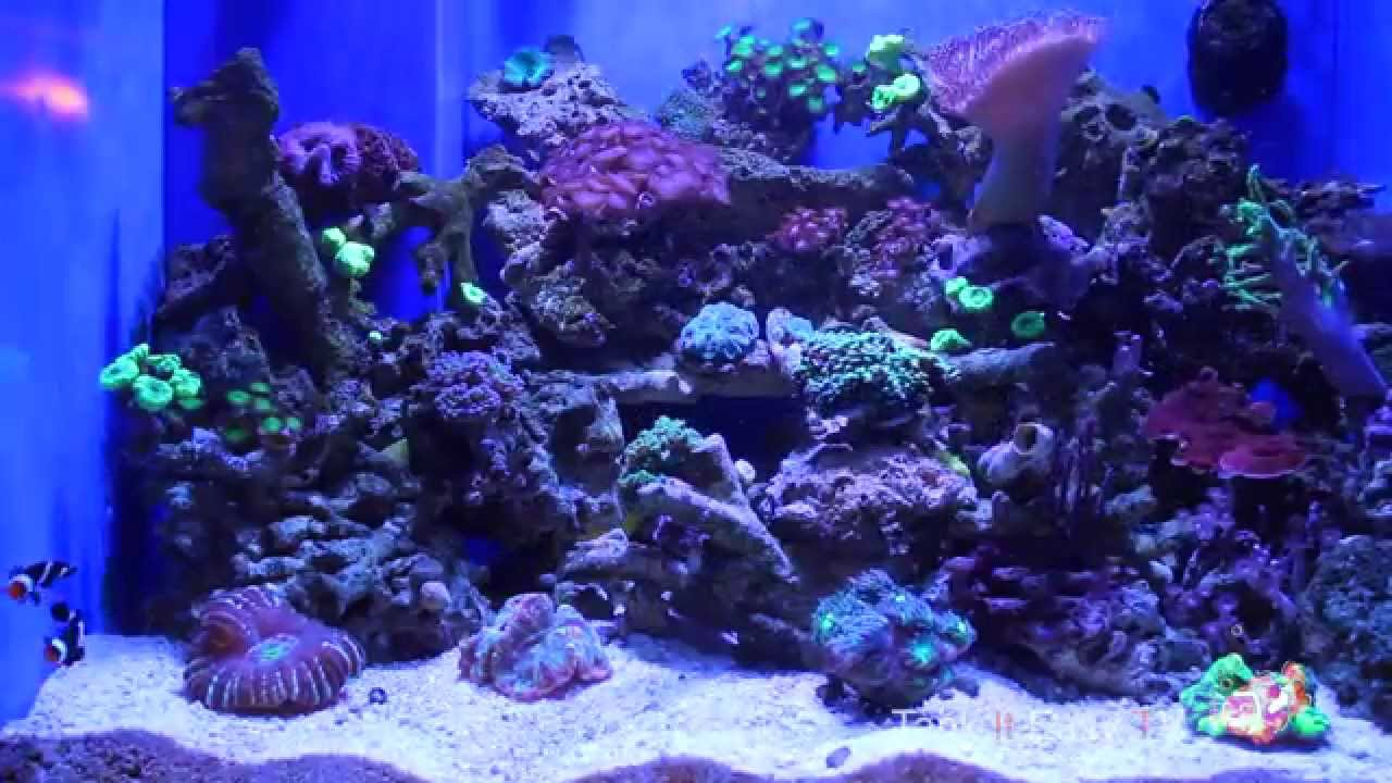 aquarium over fireplace 90 gallon reef tank youtube