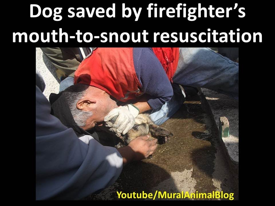 Dog Saved By Firefighter S Mouth To Snout Resuscitation
