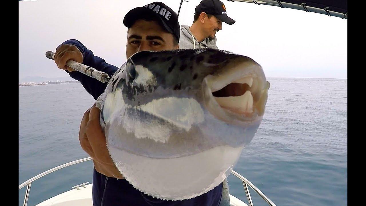 Akdeniz'in En Vahşi Balığını Yakaladık / Bu Dişler Her Şeyi Parçalıyor