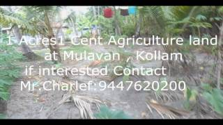 90 Cent agriculture land at kayamkulam , Alapuzzha