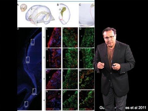 Alfredo Quiñones-Hinojosa (Johns Hopkins) Part 2: Stem Cells and Brain Tumors