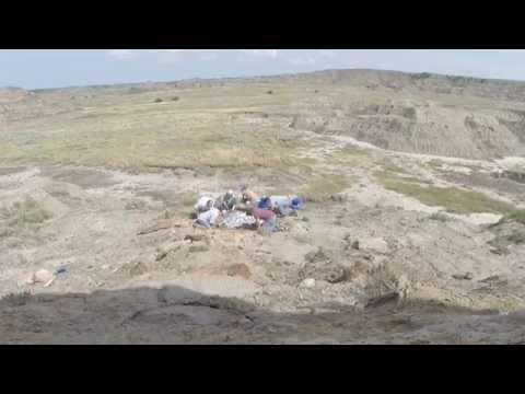 Hell Creek Fossils