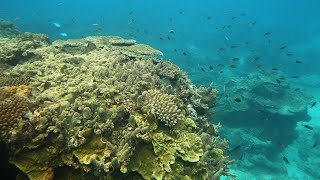 Australia to spend $379M on Great Barrier Reef