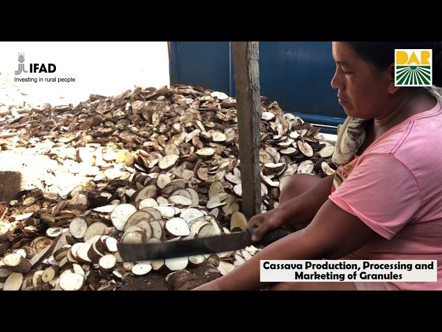 Cassava Processing and Production of North Bukidnon