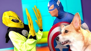 Happy Dog And Captain America Save House From Alien