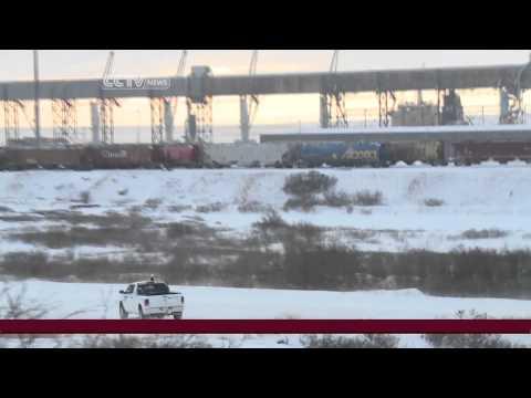 Oil development in Canada threatens polar bear population