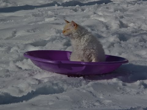 Sledding cat. Loves Snowmageddon.
