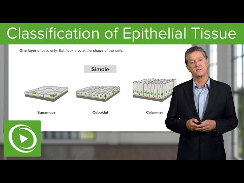 Classification of Epithelial Tissue  – Histology | Medical Education Videos