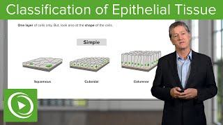 Classification of Epithelial Tissue  – Histology | Lecturio