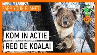 SOS KOALA | Zapp Your Planet | NPO Zapp