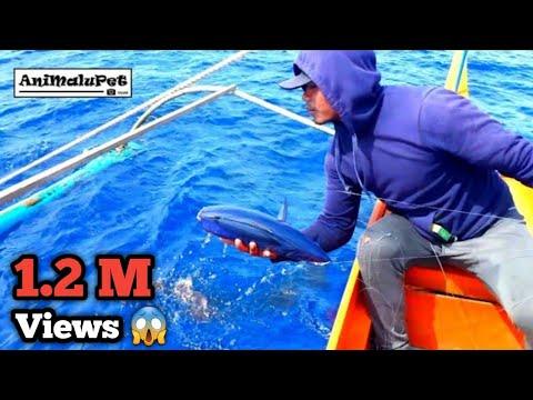Surigao Tradional Margati Fishing Catch Tulingan or Skipjack Tuna