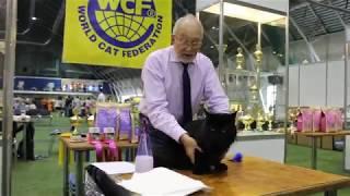 INTERNATIONAL CAT SHOW - BLACK JACK