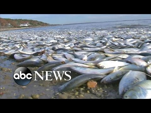 Thousands Of Fish Found Dead In Long Island Canal