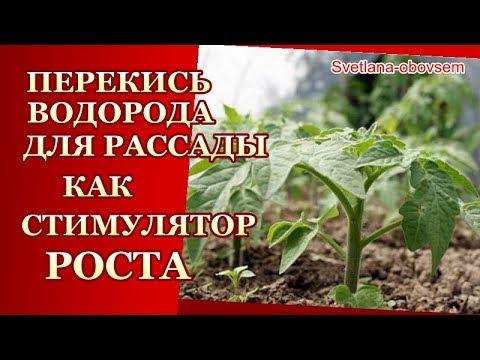 ПЕРЕКИСЬ ВОДОРОДА - СУПЕР ПОДКОРМКА для РАССАДЫ ..для РОСТА,УРОЖАЯ от БОЛЕЗНЕЙ..