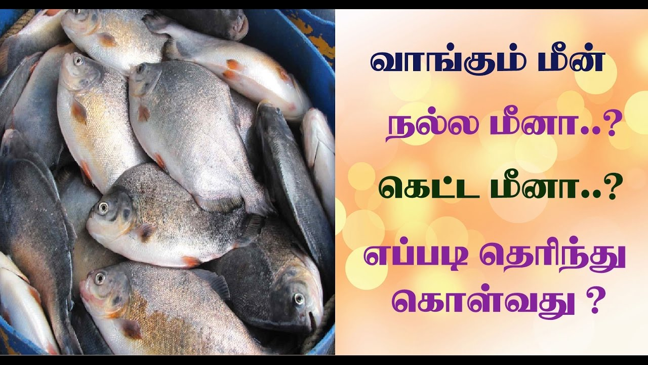 How to buy good fish in tamil for Most popular fish to eat