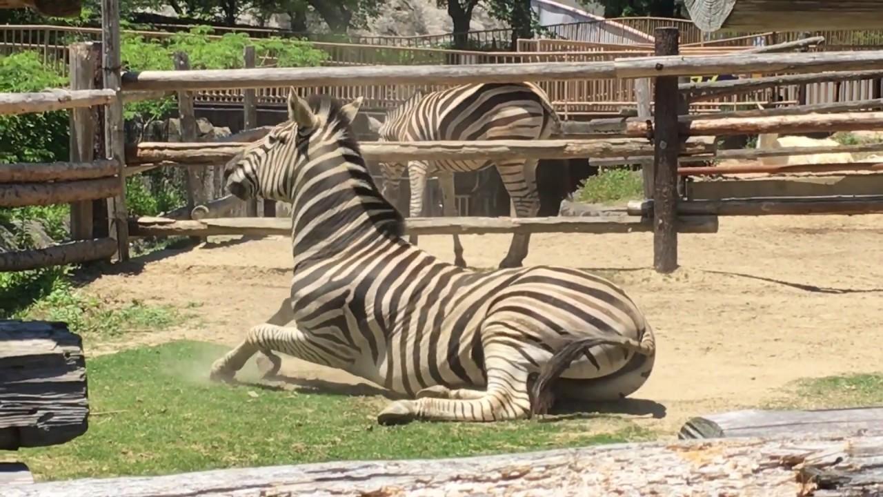 みさき公園で見つけた珍しい動きの動物たち
