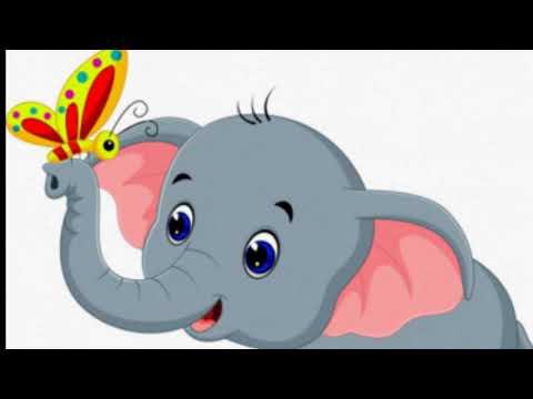 Зачем слону большие уши и длинный хобот с бивнями?