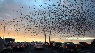О ужас! Птицы над Вашингтоном !