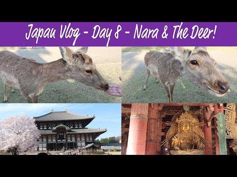 Travel Vlog - Japan 2018 - Day 8 -  Nara - Bowing deer, booping snoots & Todaiji Temple