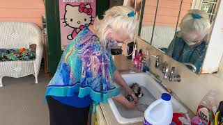 Cats By Francy kitten grooming & bath part 1