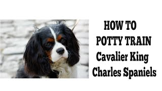 How To Easily House Train Cavalier King Charles Spaniels